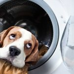 The Laundry Doer Dog Photos